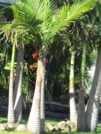 Tropical Palms in garden